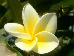 r 233 solu jolies fleurs et belles plantes page 4 le