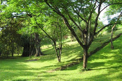 botanical gardens hotel hotel hotel horizontes de montezuma