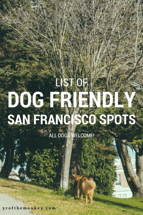 puppy socials san francisco friendly san francisco spots the best guide to enjoying sf with dogs