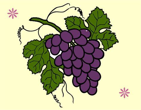 uva colors uvas dibujo color imagui