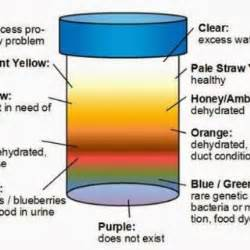 straw colored urine the color of your urine is a health indicator healthy