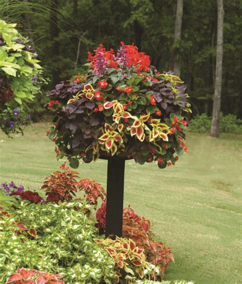 easy container gardens easy container garden create color for to fall