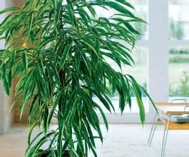 plantes d int 233 rieur sur tchat les petits fripouilles