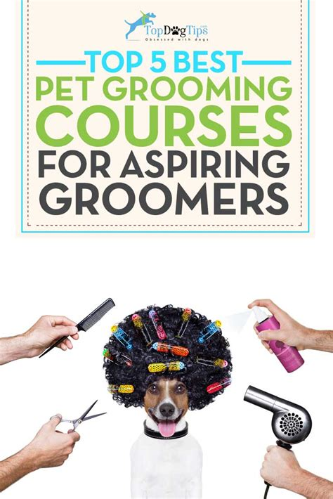 grooming courses 5 best grooming courses top tips