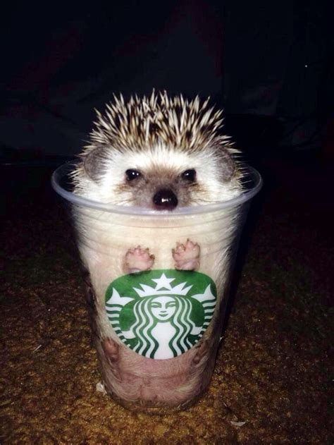 cutest house dogs 25 best ideas about cute hedgehog on pinterest happy hedgehog baby hedgehogs and