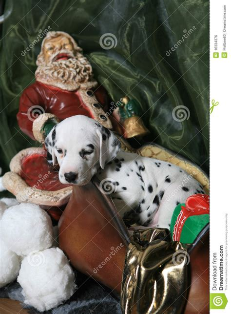 dalmatian puppy  santas sleigh  royalty  stock image image