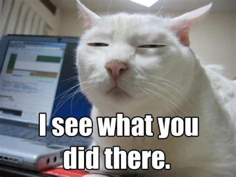 Lol Cat Meme - funny lol cat meme serious lolcat faces memes