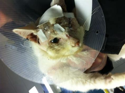 Jo In Pets To Shoot charges withdrawn in of cat in with pellet