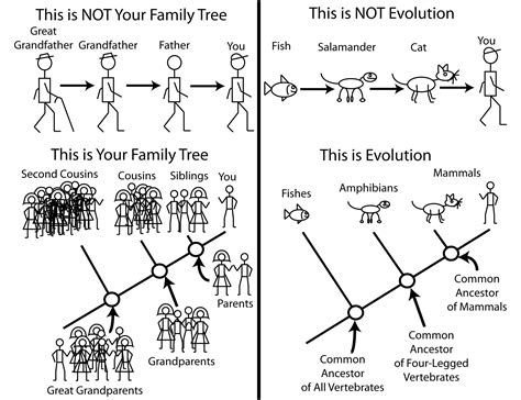 diagram explained evolution is a theory and that s a thing the