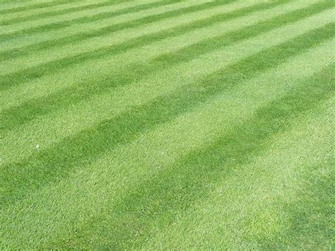 how to make a baseball field in your backyard pinterest the world s catalog of ideas