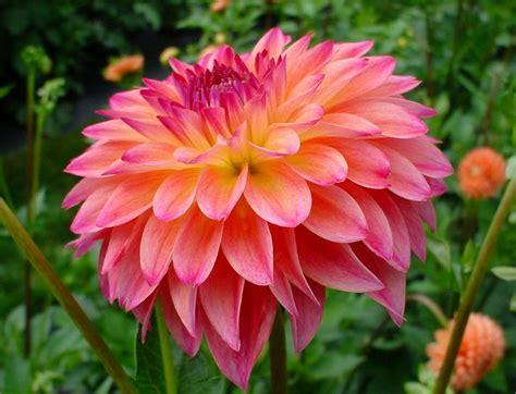 Beautiful Flower Dan Custom Nama 25 top beautiful flowers names image 2017 flowers names