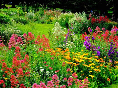 Flowering Garden Plants How To Grow A Flower Garden For The Time Garden