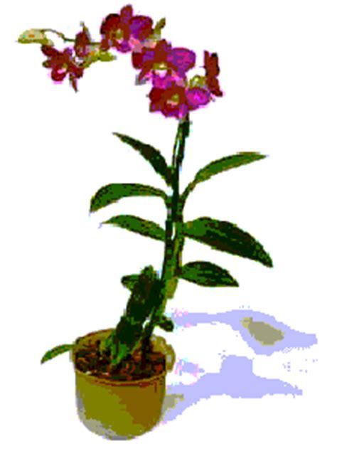 Pupuk Npk Bunga Raya tanaman hias