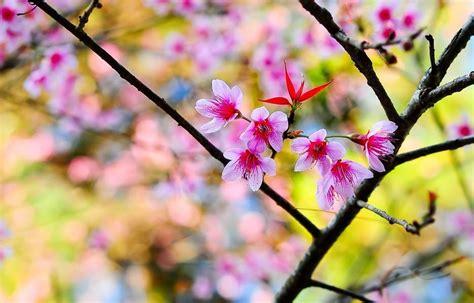 foto di fiori da scaricare immagini di fiori 47 foto sfondi hd bonkaday