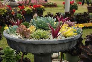 how to grow succulents in the garden or containers