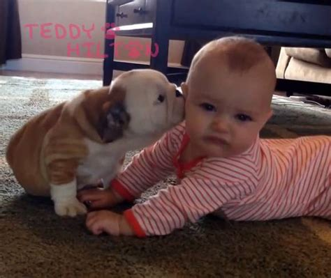 babies and puppies puppy news and photos perez
