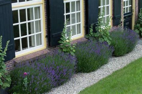 decorare odmiana jak założyć ogr 243 d żwirowy rośliny na żwirowe rabaty
