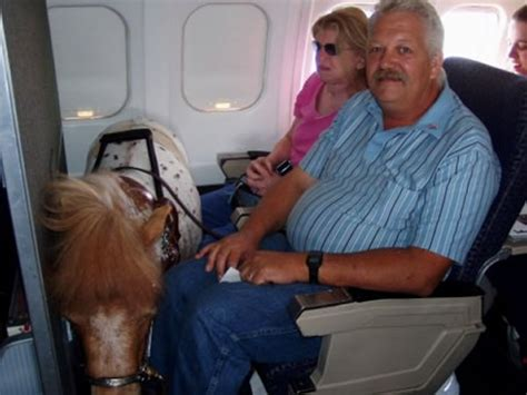 comfort dogs on airplanes 8 weird animals found on planes oddee