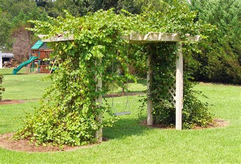 grape arbor arbors for grape vines trellis and grape arbor by gnarlyerik lumberjocks garden