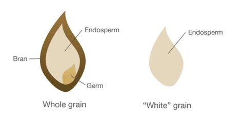 whole grains vs white the health nut corner grain confusion part 2 whole grains
