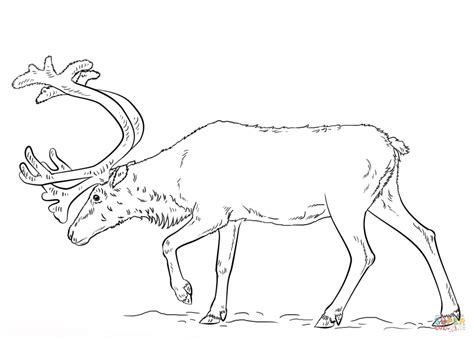 reindeer outline coloring page swedish reindeer coloring page free printable coloring pages