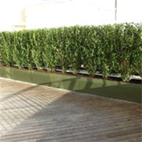 piante alte da terrazzo alberi da terrazzo piante da terrazzo alberi per il