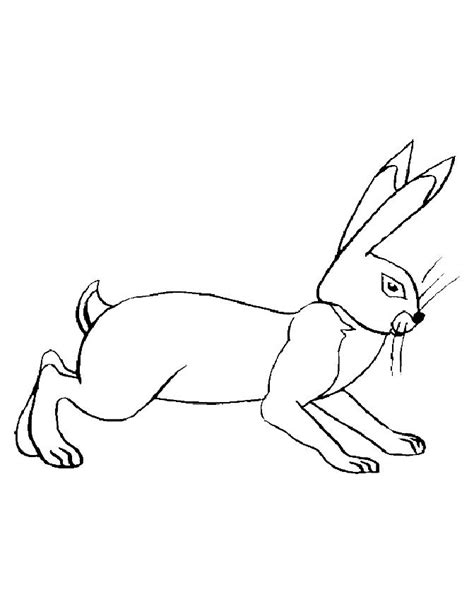 wild animals coloring pages az coloring pages