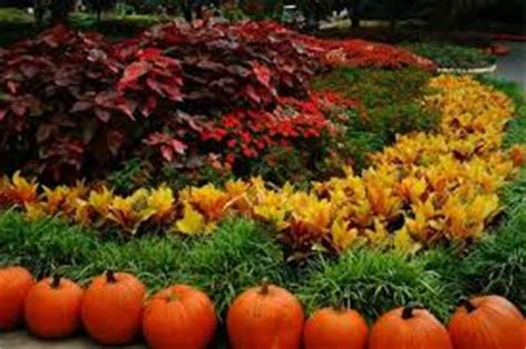 fall garden care fall garden flowers flower garden pictures pictures of