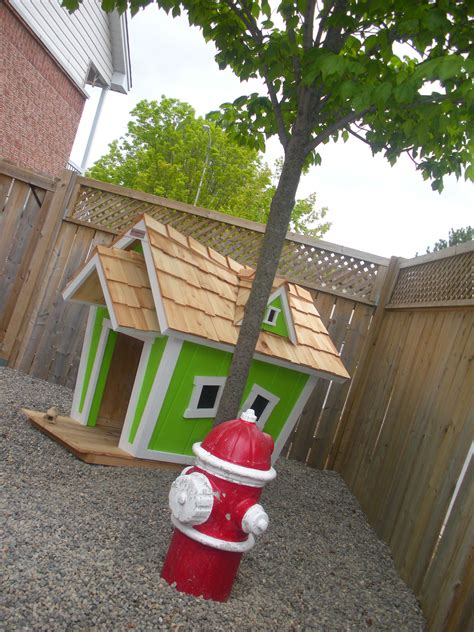 dog area in backyard pin by the rescue mama on extreme pet yards love this