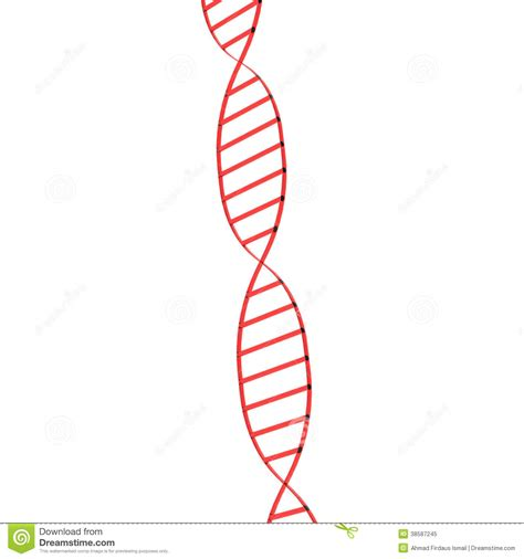 Strands Of Color single dna structure royalty free stock photo image