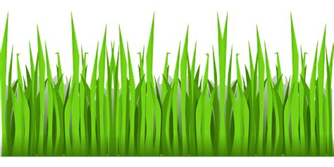 green grass growing  vector graphic  pixabay