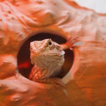reptile room hayward reptile room pet stores hayward ca reviews photos yelp