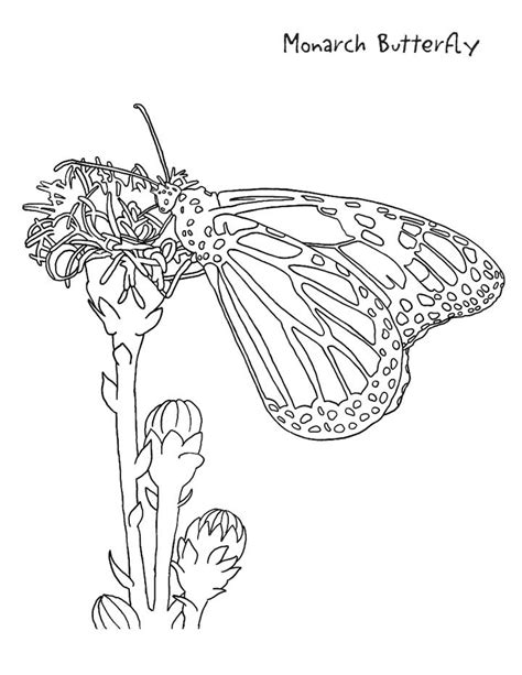coloring pages of monarch butterflies monarch butterfly coloring pages az coloring pages