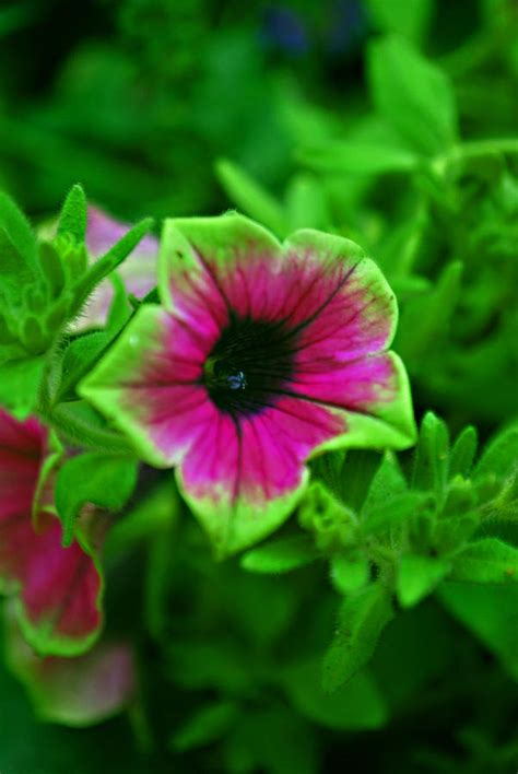 purple and green flower photograph by michelle cruz