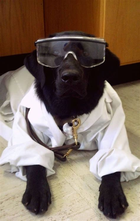 science of dogs 23 best images about lab safety on lego and science lab safety