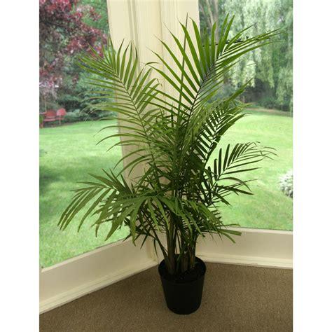 majesty palm majesty palm palm trees wallpaper plants