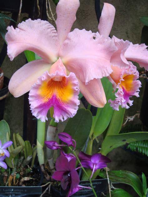 garden orchids and roses auf pinterest orchideen dfte 946 besten orchideen bilder auf pinterest sch 246 ne blumen