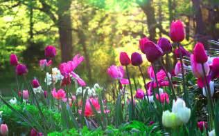 Garden Flower Images Blogues 194 187 Flower Garden 194 187 Ma Plan 232 Te Pps Diaporama Gratuit A Telecharger