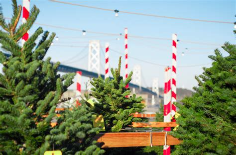 urban christmas tree shopping may soon get easier