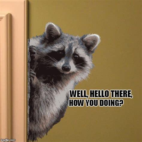 Meme Generator Raccoon - hello there imgflip