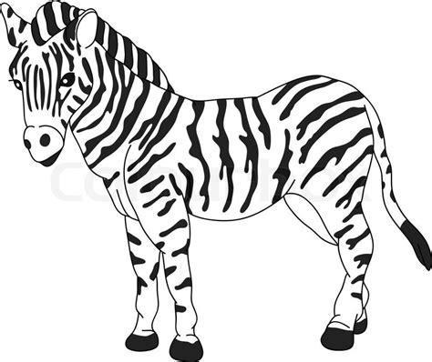 Zebra Outline Picture by Vector Zebra Standing Isolated On Background Stock Vector Colourbox