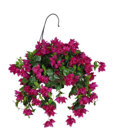 Hanging Flower Basket bougainvillea hanging plant in basket yard