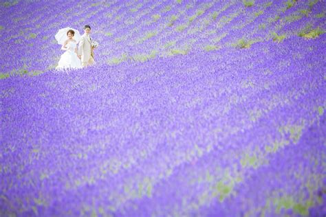Autumn Flower by Pre Wedding Photo In Japan Furano Hokkaido Japan La Vie