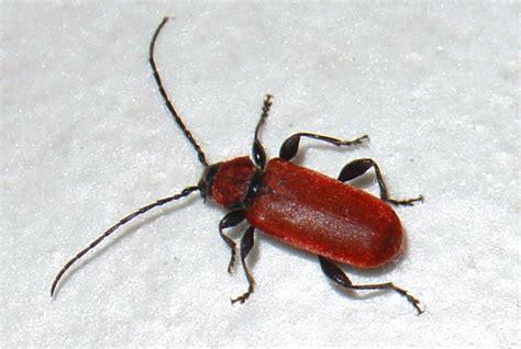 les insectes et autres animaux du sol coll 232 ge