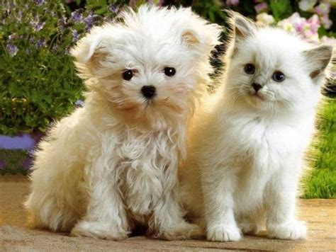 cats and dogs 2 cats and dogs 7 photos izismile