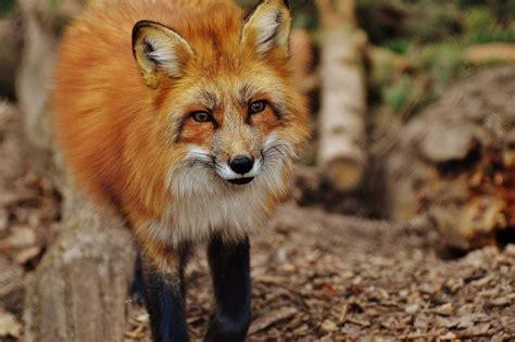 wilde dieren een gelukkig moment  geensceneerd