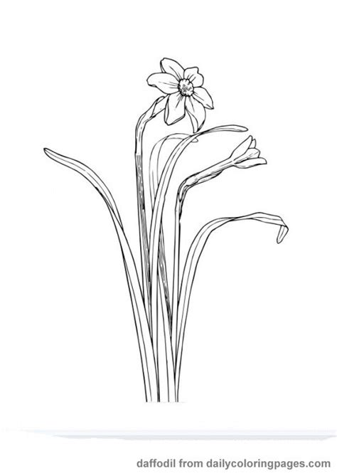realistic flower coloring page realistic flower coloring pages great ideas pinterest