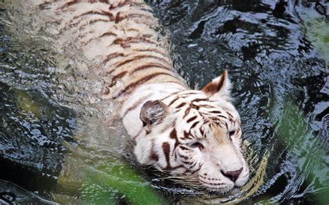 imagenes de animales naturales banco de im 225 genes para ver disfrutar y compartir