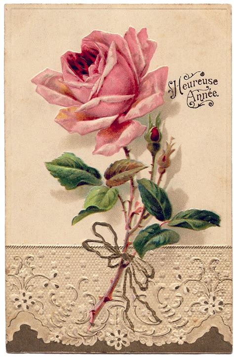 vintage roses beautiful varieties french image beautiful rose with lace graphics fairy french vintage and free printable