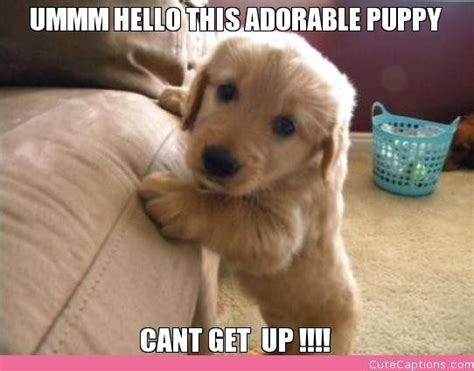 puppy captions adorable pictures with captions ummm hello this adorable puppy cant get up